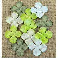 Гортензии зеленые оттенки, 35 мм